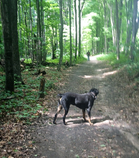 Thor on the Trail ~ Photo by Patrice