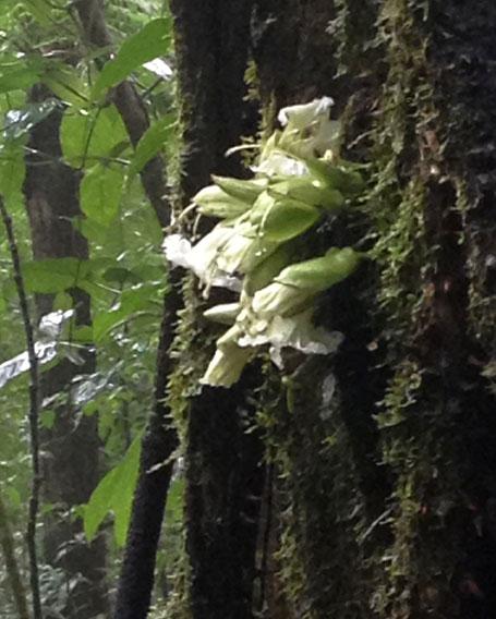 Rainforest Flower ~ Photo by Patrice