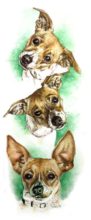 3 Faces of Foxy ~ watercolour Painting by Patrice