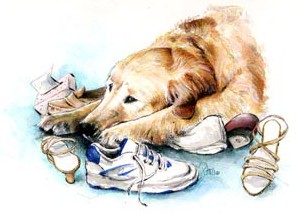 Sad Golden ~ Illustration by Patrice