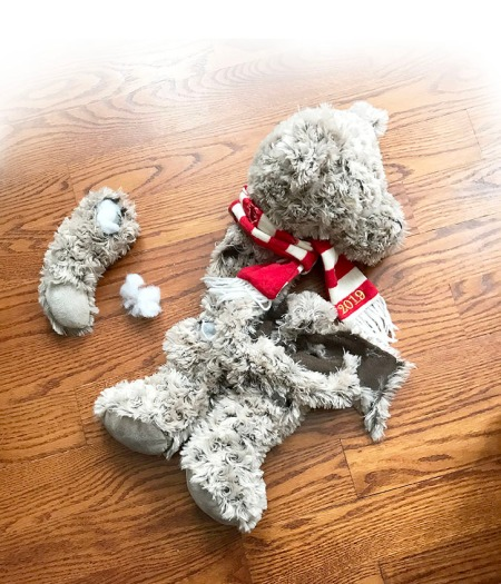 Ceile's Torn Teddy Bear ~ Photo by Patrice