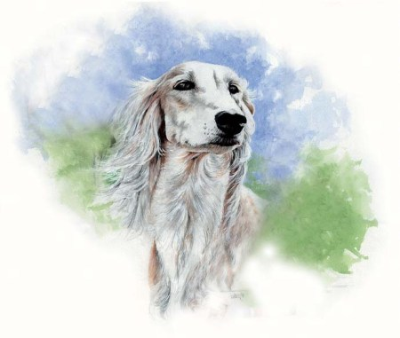 Saluki ~ Watercolour by Patrice