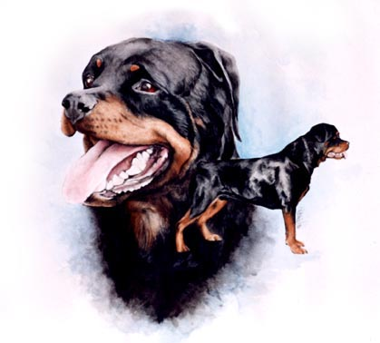 Courageous Rottie ~ Watercolour by Patrice