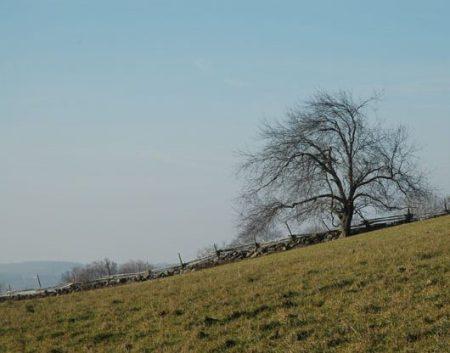 Mulmur Hills Farmland ~ Photo by Patrice