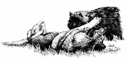 Shepherd and Bouvier playing ~ Illustration by Patrice