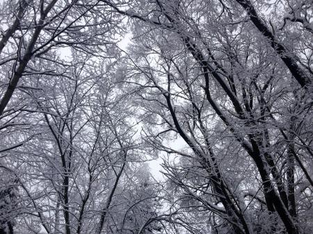 Winter Snow ~ Photo by Patrice