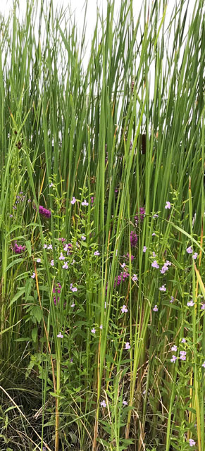 Wildflowers and Grasses - Photo by Patrice